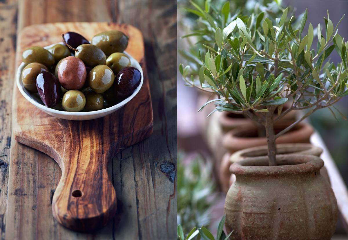 ELIAGORA бережно выращивает и собирает каждую оливку.