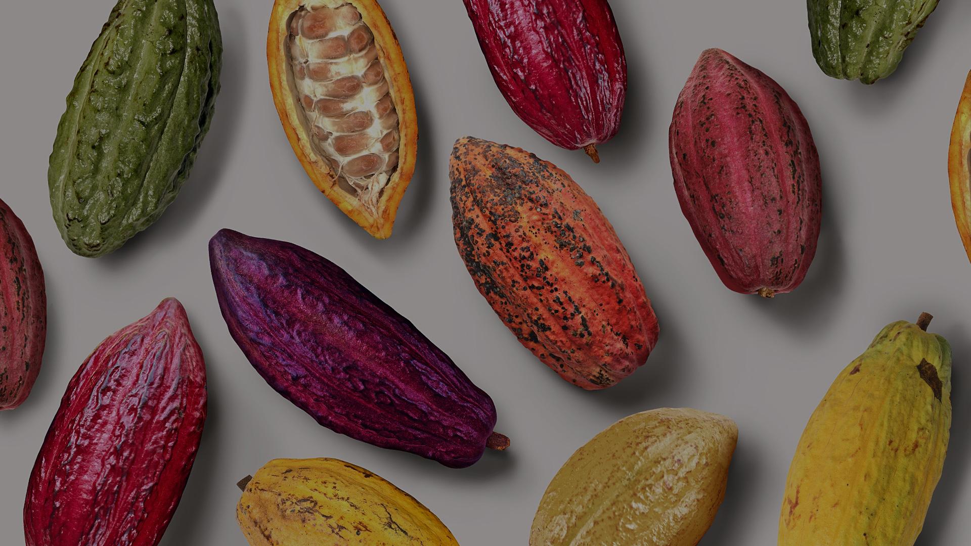 Какао-бобы —основа айдентики и вдохновение для разработки фирменного стиля Chocopaz